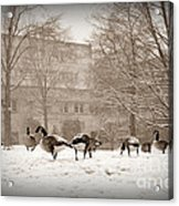 Are You Joining Us... Acrylic Print