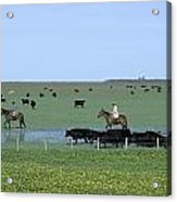 Argentine Gauchos, Or Cowboys, Herd Acrylic Print by James P. Blair