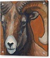 Aries - Ram Painting Acrylic Print