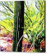Arizona Catcus Acrylic Print