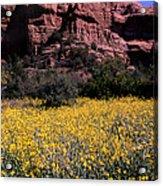 Arizona Flower Field Acrylic Print by Barry Shaffer