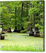 Arkansas Lake With Cypresses Acrylic Print