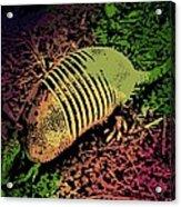 Armadillo Acrylic Print