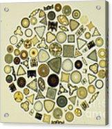 Arrangement Of Diatoms Acrylic Print