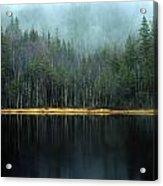 Arrow-straight Evergreens Are Reflected Acrylic Print
