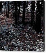 Arrowleaf Balsamroot Acrylic Print
