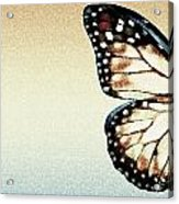Artistic Butterfly Acrylic Print