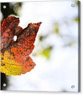 Artsy-fartsy Autumn I Acrylic Print