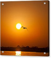 As The Gull Glides Acrylic Print