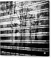 As The Swamp Sleeps Acrylic Print by Empty Wall