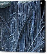 Asbestos, Sem Acrylic Print