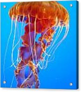 Ascending Jellyfish Acrylic Print