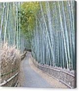 Asia Japan Kyoto Arashiyama Sagano Acrylic Print