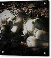 Asleep In The Leaves Acrylic Print