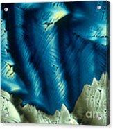 Asparagine Acrylic Print