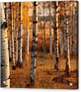 Aspen Amber Acrylic Print