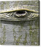 Aspen Eye Acrylic Print