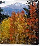 Aspen Grove And Pikes Peak Acrylic Print
