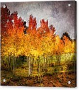 Aspen Grove In Autumn Acrylic Print