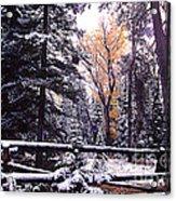 Aspen In Snow Acrylic Print by Barry Shaffer