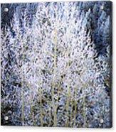 Aspen Lace Acrylic Print