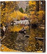 Aspen Leaves On Stream Acrylic Print