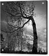 Aspen Silhouette Acrylic Print