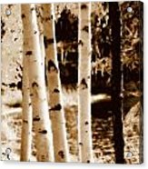 Aspens S L Acrylic Print