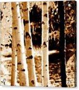 Aspens S Ll Acrylic Print