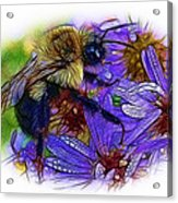 Asters With Dew And Bumblebee Acrylic Print
