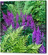 Astilbe And Ferns Acrylic Print