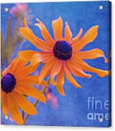 Attachement - S11at01d Acrylic Print