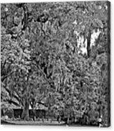 Audubon Park 2 Monochrome Acrylic Print