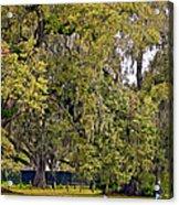 Audubon Park 2 Acrylic Print by Steve Harrington
