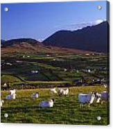 Aughrim Hill, Mourne Mountains, County Acrylic Print