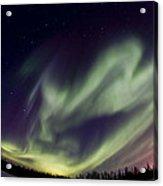 Aurora Goose Acrylic Print