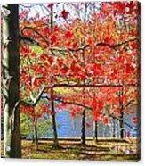 Autum Colors Acrylic Print