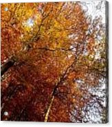 Autum Colours Acrylic Print