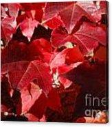 Autumn 11 Acrylic Print by Elena Mussi