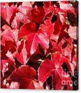 Autumn 13 Acrylic Print by Elena Mussi