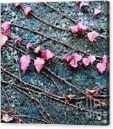 Autumn 18 Acrylic Print by Elena Mussi