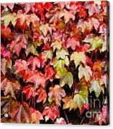 Autumn 5 Acrylic Print by Elena Mussi