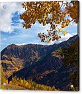 Autumn Above Aspen Acrylic Print