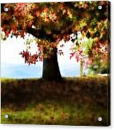 Autumn Acorn Tree Acrylic Print