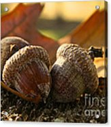 Autumn Acorns Acrylic Print
