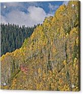 Autumn Aspens San Juan Mountains Acrylic Print