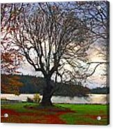 Autumn At British Camp Acrylic Print