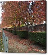 Autumn At Its Best Acrylic Print by Naomi Berhane