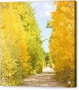 Autumn Back County Road Acrylic Print