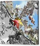 Autumn Beauty Acrylic Print
